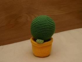 Cactus bolón con maceta amarilla